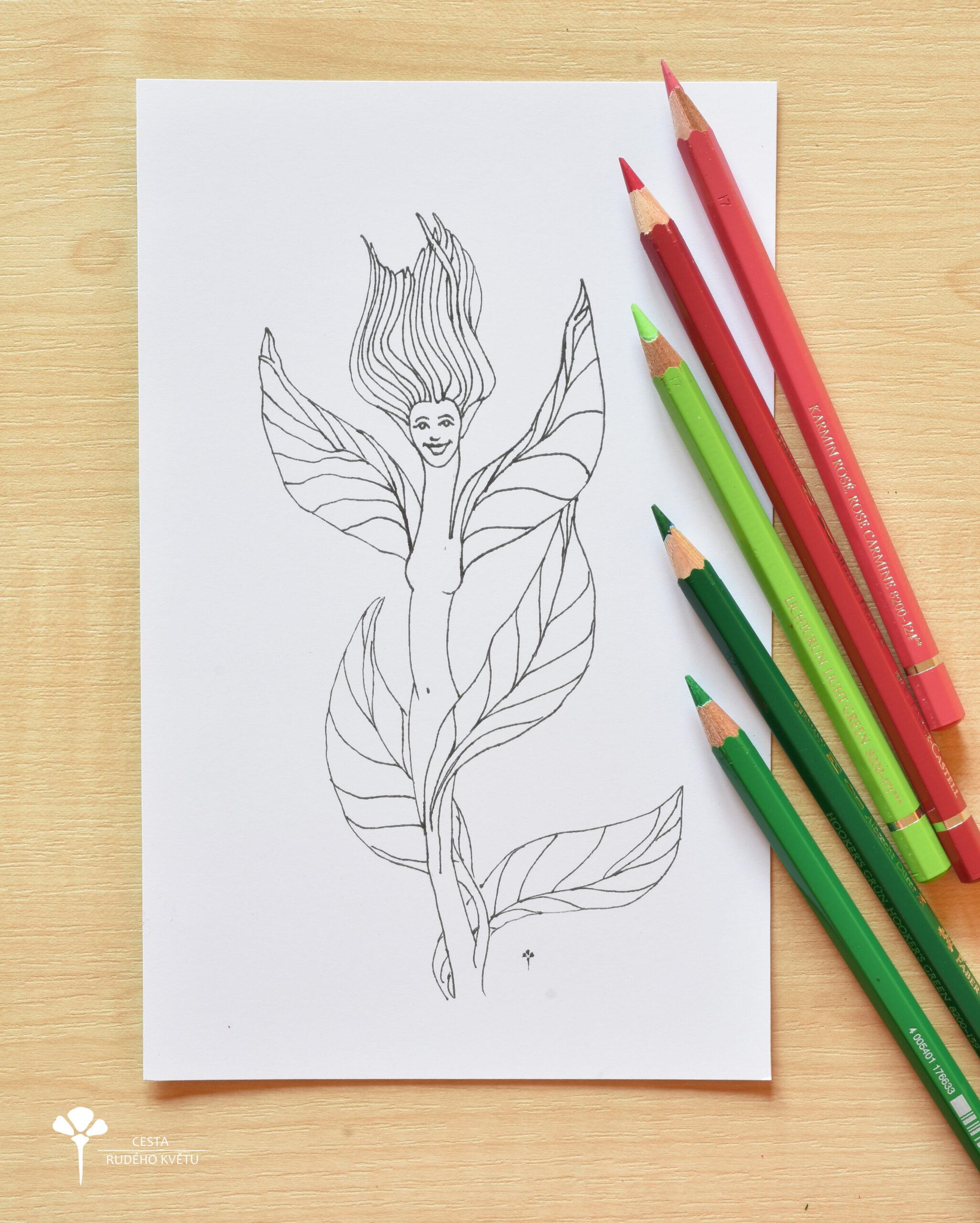 Květina – energie v těle